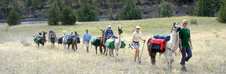Black-canyon-Llama-Trekk