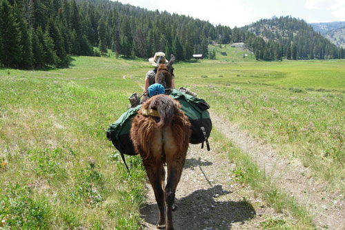 Overnight Backpacking Camping Trails in Yellowstone